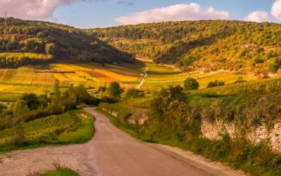 Vente de vin de Bourgogne de propriété réputée