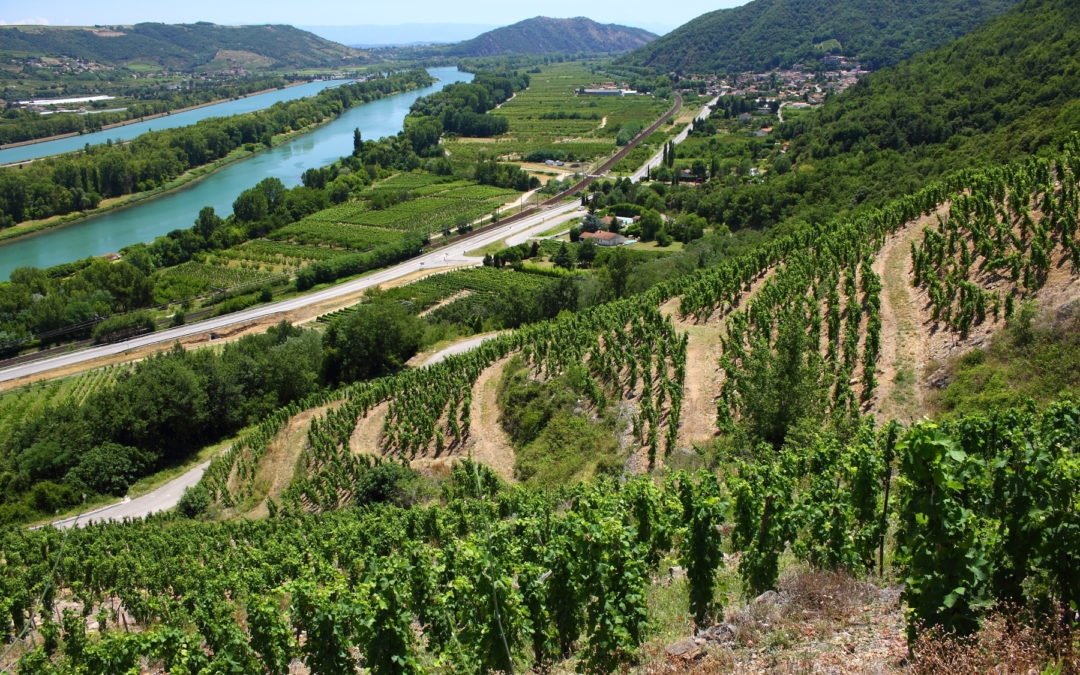 Vente en ligne de vin de la vallée du Rhône