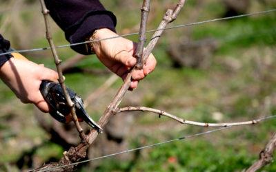 Qui sont les vignerons indépendants ?
